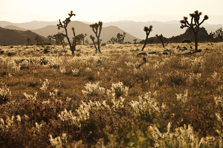 Joshua Tree National Park at Sunset  Marni Mattner Photography