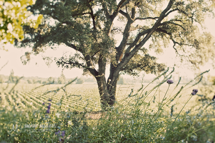 Lone Oak Tree Where Wedding Ceremony Was Held  Marni Mattner Photography