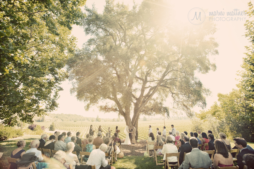 Healdsburg Country Gardens ceremony under the big lone oak tree  Marni Mattner Photography