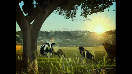 "Emmy-Winning ""Cow Caregivers, Earth Caretakers"" WDA Video Featuring Marni Mattner Photography"