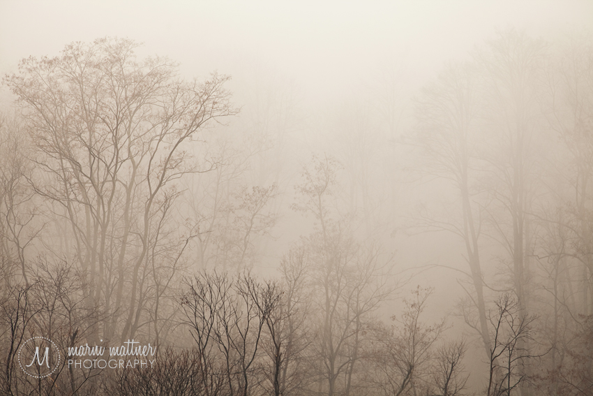 Foggy Forest Near Premana, Italy © Marni Mattner Photography