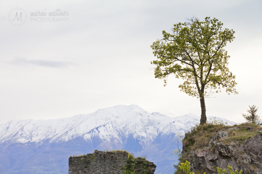 Lone Tree Near A Castle in Pian di Spagna By Lake Como  Marni Mattner Photography
