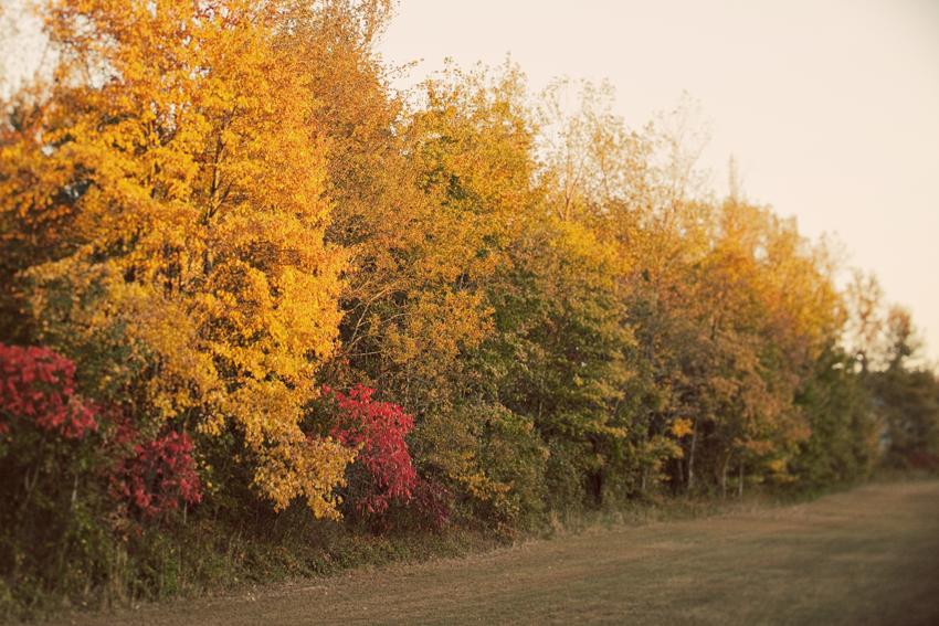 Fall Foliage - Dreamy Autumn Wedding Day in Nashville, TN © Marni Mattner Photography