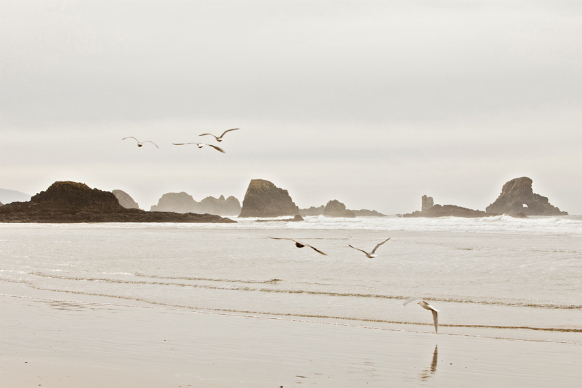 Seagulls Flying Near Cannon Beach Western Oregon Coastline © Marni Mattner Photography