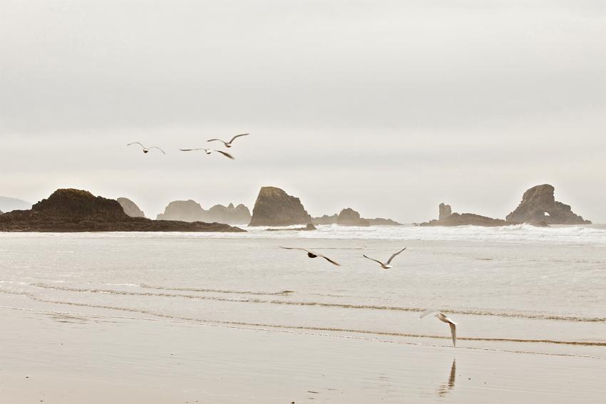 Seagulls Flying Near Cannon Beach Western Oregon Coastline © Marni Mattner Photography