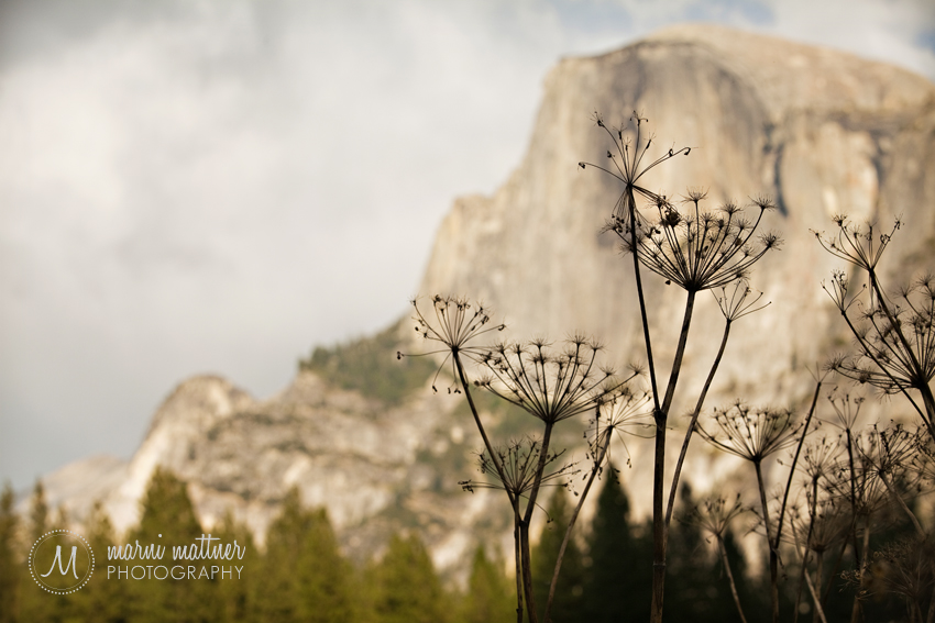Yosemite's Half Dome © Marni Mattner Photography