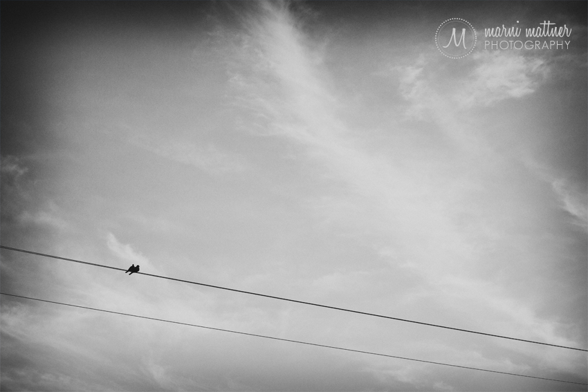 The Morning Doves That Watched Patrick & Christina's Wedding in the Boulder, CO Foothills © Marni Mattner Photography